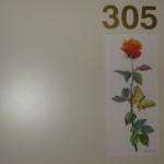 Stanza 305